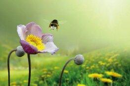 Vanaf zondag 7 april: Insecten in de Schaapskooi