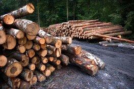 Gemeente wil herplant van gekapte bossen